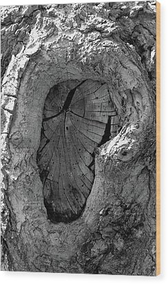 Wood Print featuring the photograph Tahoe Abstract Bark by LeeAnn McLaneGoetz McLaneGoetzStudioLLCcom