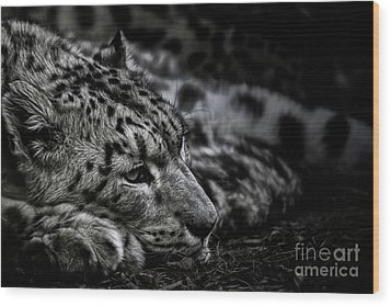Taking A Break Wood Print by Brad Allen Fine Art