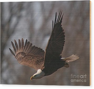Taking Aim On Lunch Wood Print by Robert Pearson