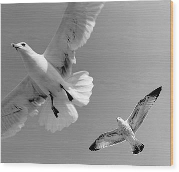 Taking Flight Wood Print