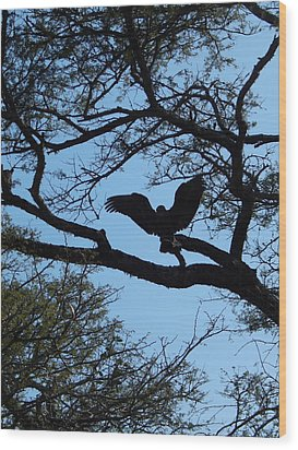 Taking Flight South Africa Wood Print by Patrick Murphy
