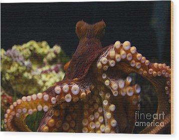 Tako Not Taco Hawaiian Octopus Wood Print