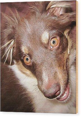 Talking Dog Wood Print by Gwyn Newcombe