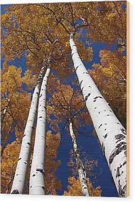 Tall Aspen Wood Print