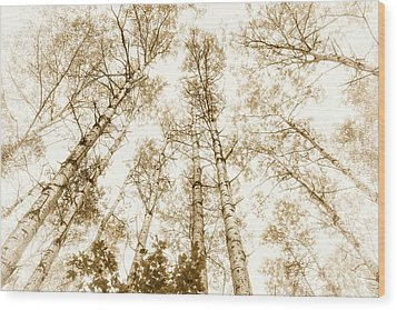 Wood Print featuring the photograph Tall Aspens by Elena Elisseeva