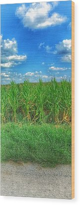 Wood Print featuring the photograph Tall Corn by Jame Hayes