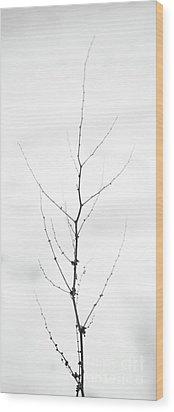 Tall Wood Print by Gabriela Insuratelu