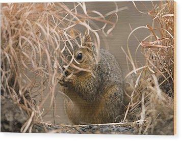 Tall Grasses Make Up A Fox Squirrels Wood Print by Joel Sartore