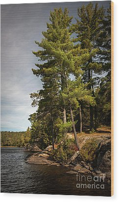 Wood Print featuring the photograph Tall Pines On Lake Shore by Elena Elisseeva