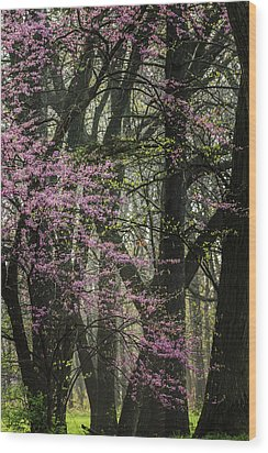 Tall Red Buds In Spring Wood Print by Joni Eskridge