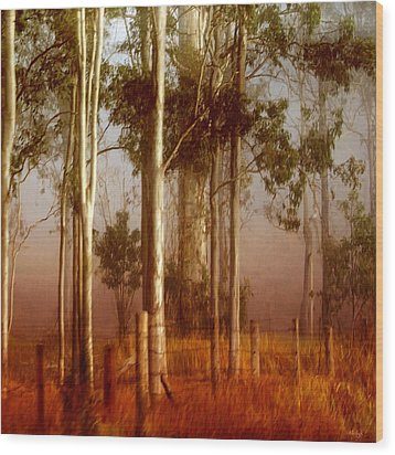 Tall Timbers Wood Print