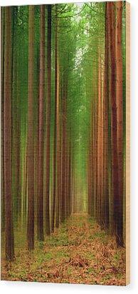 Tall Trees Wood Print by Svetlana Sewell