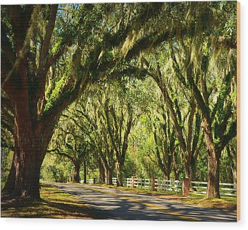Tallahassee Canopy Road Wood Print by Carla Parris