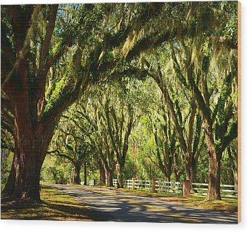 Tallahassee Canopy Road Wood Print
