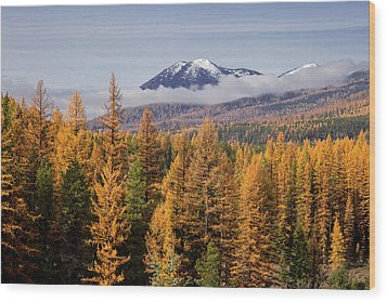Tamarack Glory Wood Print