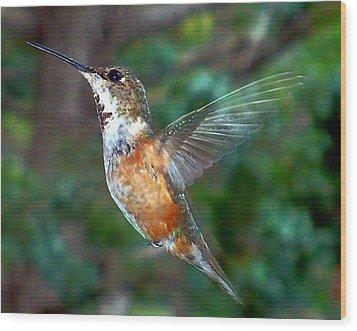 Tan Hummingbird Wood Print by Joseph Frank Baraba