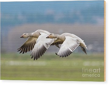 Wood Print featuring the photograph Tandem Glide by Mike Dawson