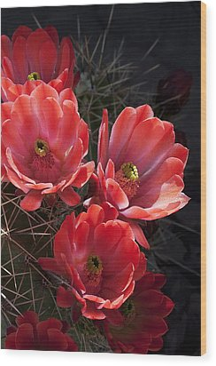 Tangerine Cactus Flower Wood Print by Phyllis Denton