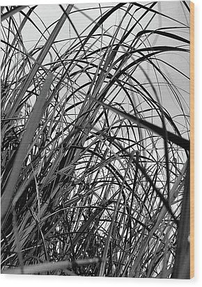 Wood Print featuring the photograph Tangled Grass by Susan Capuano