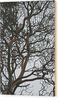 Tangled Web Tree Wood Print by Carol  Eliassen