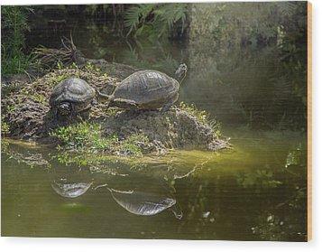 Tanning Turtles Wood Print