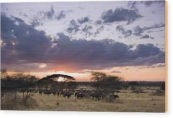 Tarangire Sunset Wood Print by Adam Romanowicz