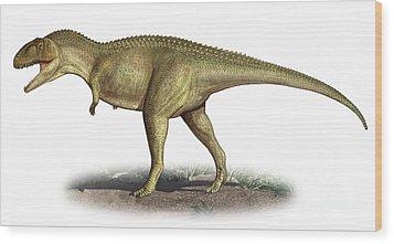 Tarascosaurus Salluvicus, A Prehistoric Wood Print by Sergey Krasovskiy