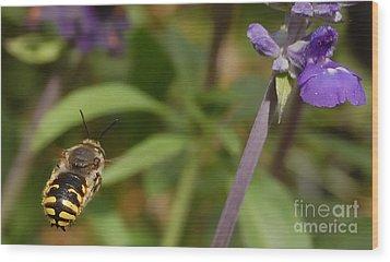 Target In Sight - Honey Bee  Wood Print