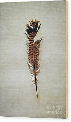 Wood Print featuring the photograph Tattered Turkey Feather by Stephanie Frey