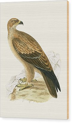 Tawny Eagle Wood Print by English School