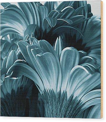 Teal Gerberas Wood Print by Tony Grider