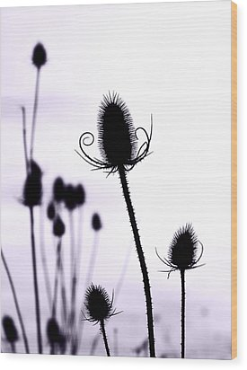Teasels In A French Field  I Wood Print by Gareth Davies
