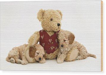 Teddy Bear With Puppies Wood Print by Jane Burton
