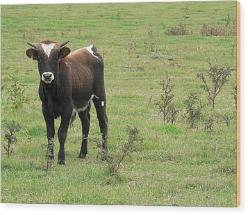 Wood Print featuring the photograph Teen Cow by Elizabeth Fontaine-Barr