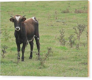 Teen Cow Wood Print by Elizabeth Fontaine-Barr
