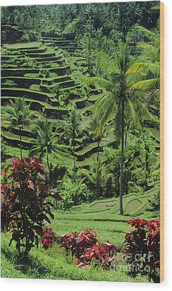 Tegalalang, Bali Wood Print by William Waterfall - Printscapes