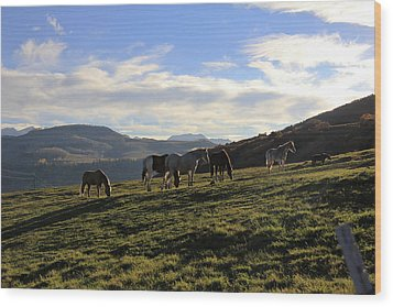 Telluride Mountain Herd Wood Print