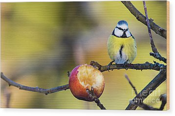 Wood Print featuring the photograph Tempting by Torbjorn Swenelius