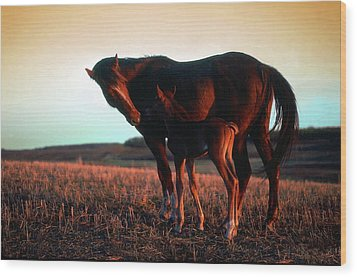 Tender Moment Wood Print by Jim Sauchyn