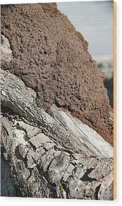 Termite Nest Wood Print by Steve Madore