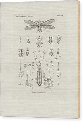 Termites, Macrotermes Bellicosus Wood Print by H Hagen