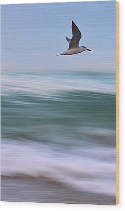 Wood Print featuring the photograph Tern Flight Vert by Laura Fasulo