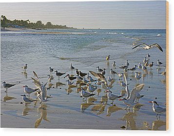 Terns And Seagulls On The Beach In Naples, Fl Wood Print by Robb Stan