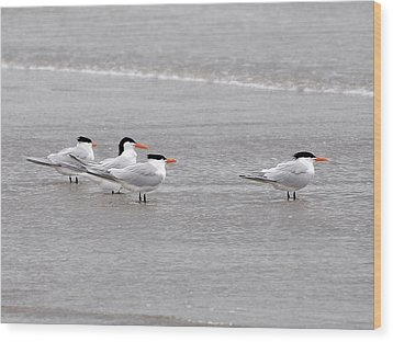 Terns Wading Wood Print by Al Powell Photography USA