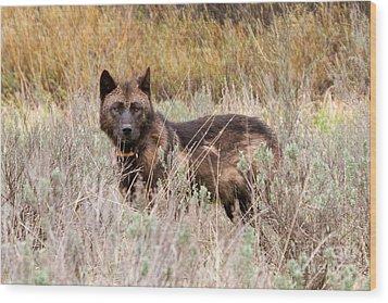 Teton Wolf Wood Print