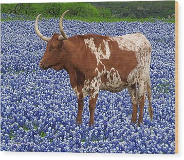 Da227 Tex And The Bluebonnets Daniel Adams Wood Print