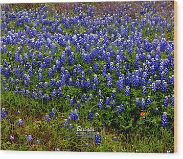 Wood Print featuring the photograph Texas Bluebonnets #0484 by Barbara Tristan