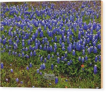 Texas Bluebonnets #0484 Wood Print