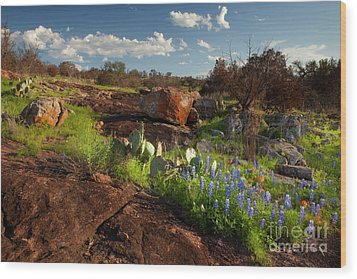 Texas Blue Bonnets And Cactus Wood Print by Keith Kapple