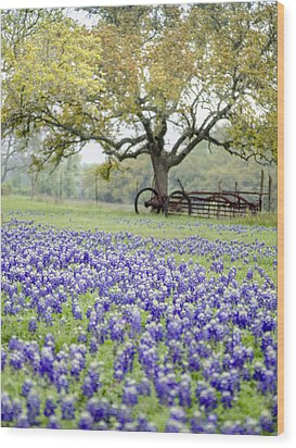 Texas Bluebonnets And Rust Wood Print by Debbie Karnes